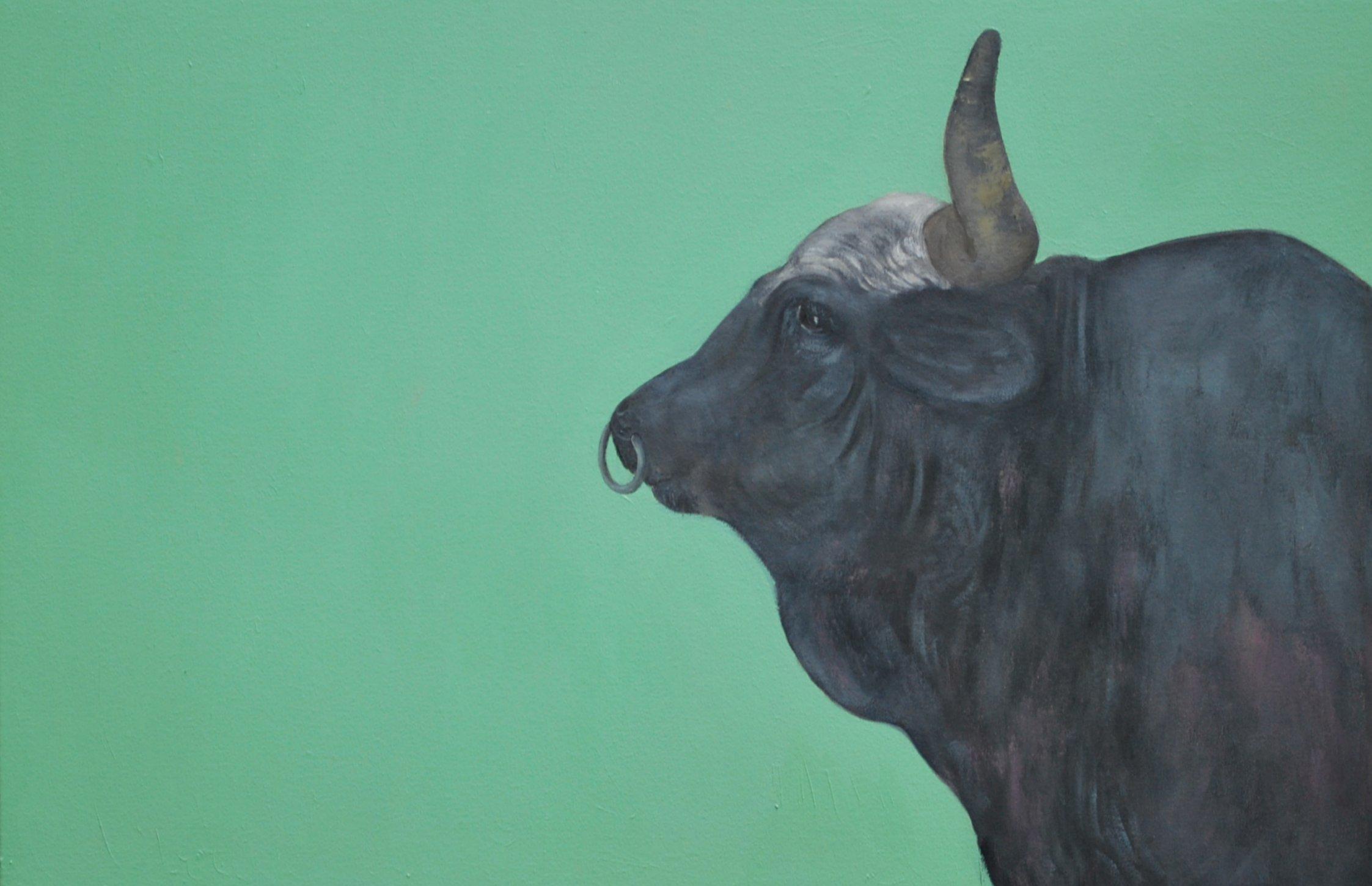 The Bull, 2014