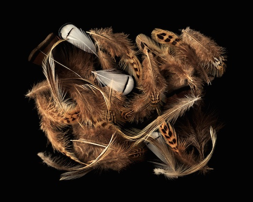 Twenty-nine Feathers, 2016