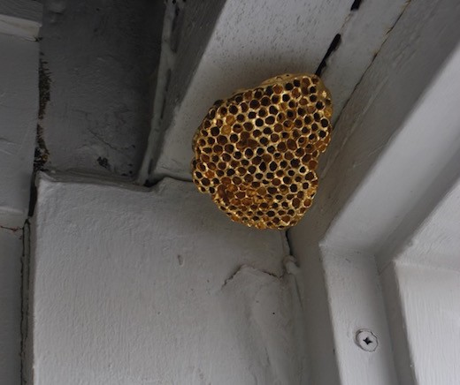 Wasp Nests, 2016