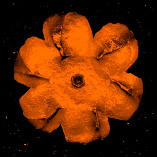 Power Flower, 2016
