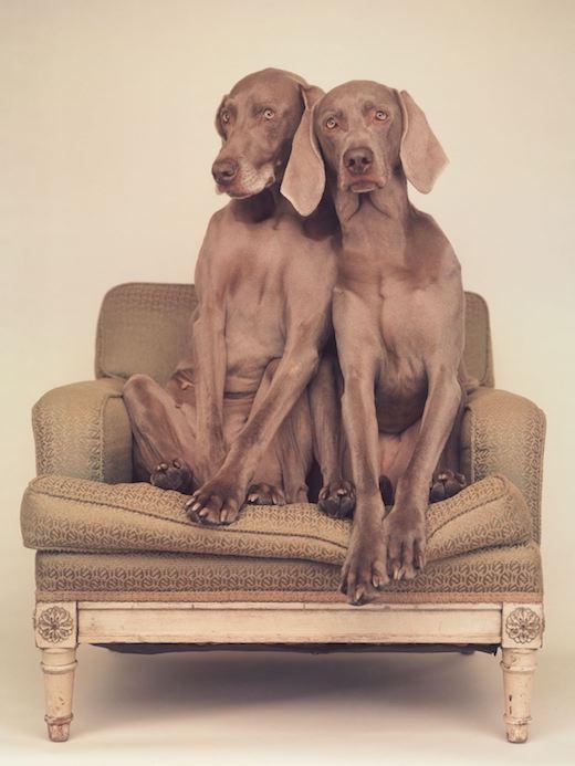 Grey Duo, 2016
